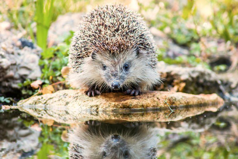 Hedgehog Principle